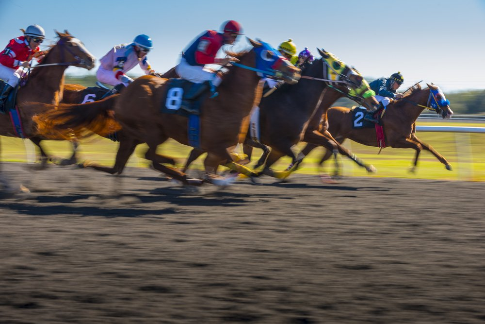 Betta på hästkapplöpningens