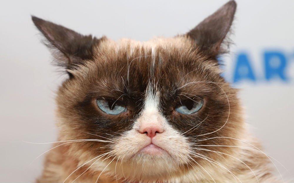 Ännu en sorg i 2019 – Grumpy Cat har avlidit